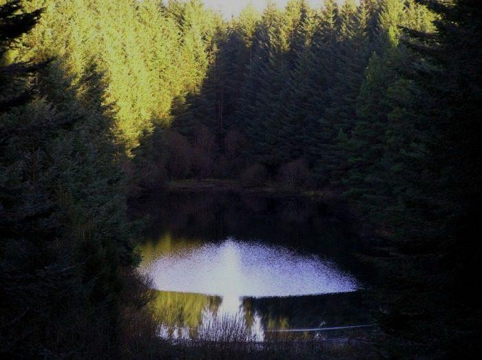 Coillte to unveil Planting Plan for Bonny Glen